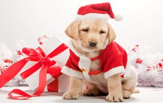 Eventi Natale